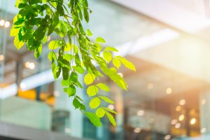 Make room for plants in your office